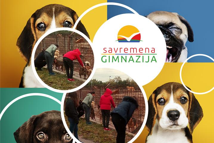 """Humanost na delu: Savremeni učenici darivali hranu prihvatilištu za pse u okviru akcije """"Volimo životinje i pomažemo im"""""""